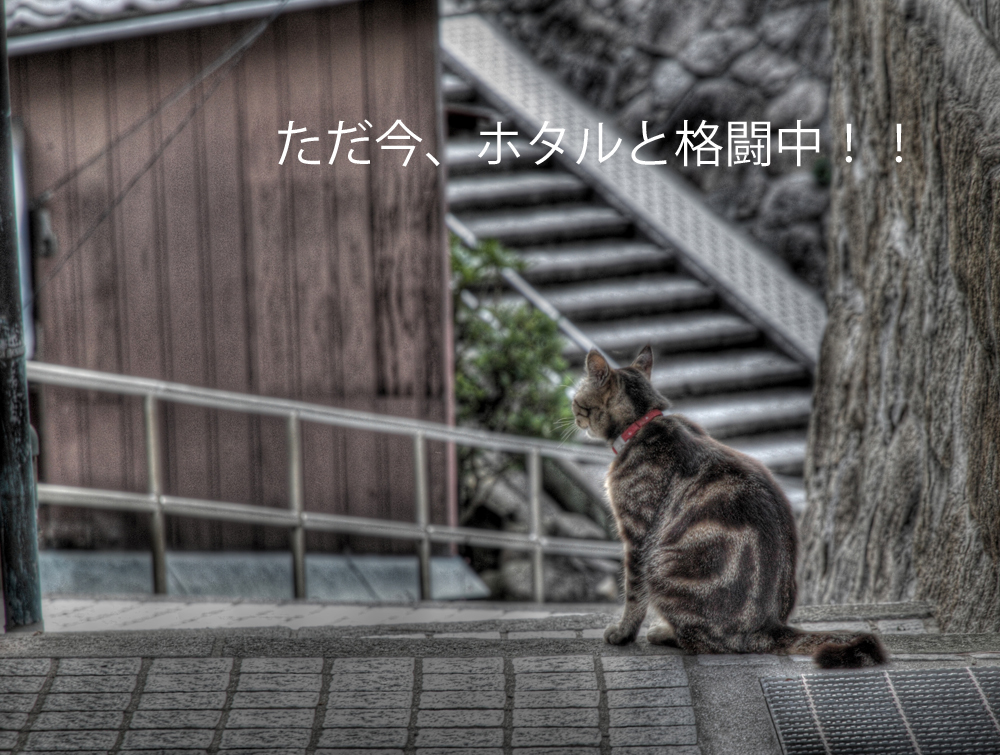IMG_7235_1__-1.jpg