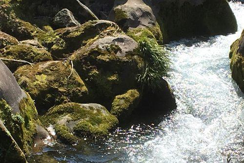290328 千手川の甌穴群13