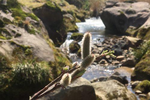 290328 千手川の甌穴群20