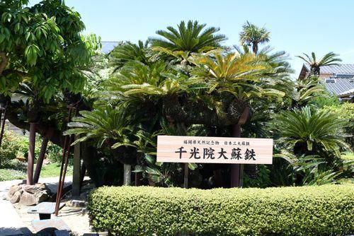 290504 岡湊神社13
