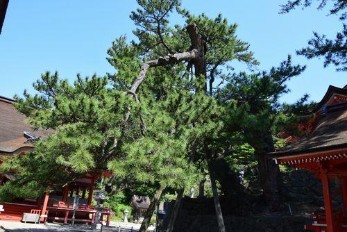 290520 日御碕神社6
