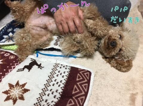 fc2blog_20170517221607ca2.jpg