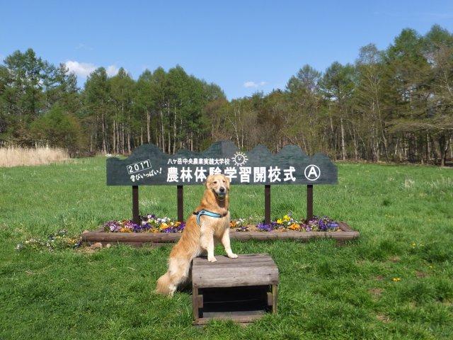 八ヶ岳中央農業実践大学校 2017.5.14 042