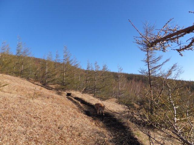 まぼろしの滝 2017.5.20 039