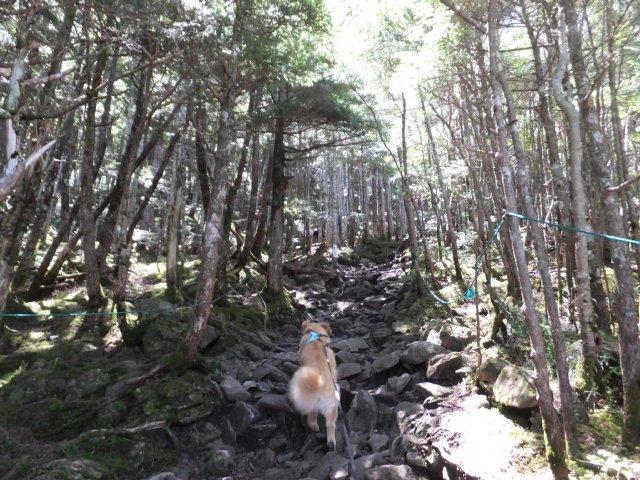 蓼科山 2017.5.27 026