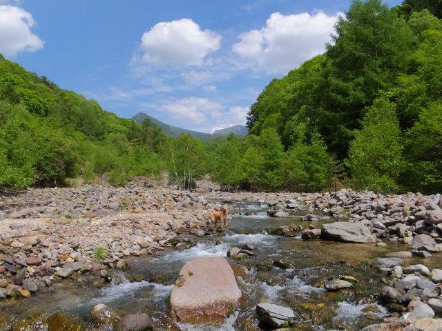 八ヶ岳の川 2017.6.11 033