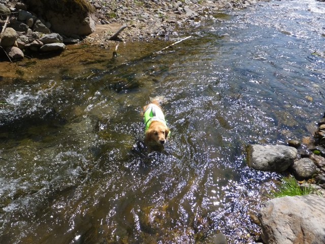 八ヶ岳の川 2017.6.11 050