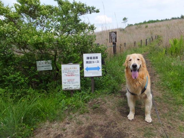 霧ヶ峰2017-6-24 014