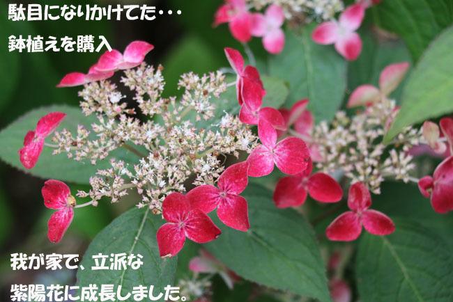 0A1A9336-98765456-98765.jpg