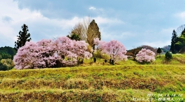 又兵衛桜、法起寺N 007 (750x414)
