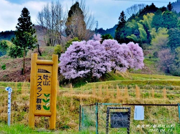 又兵衛桜、法起寺N 019 (750x562)