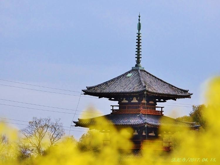 又兵衛桜、法起寺N 086 (750x563)