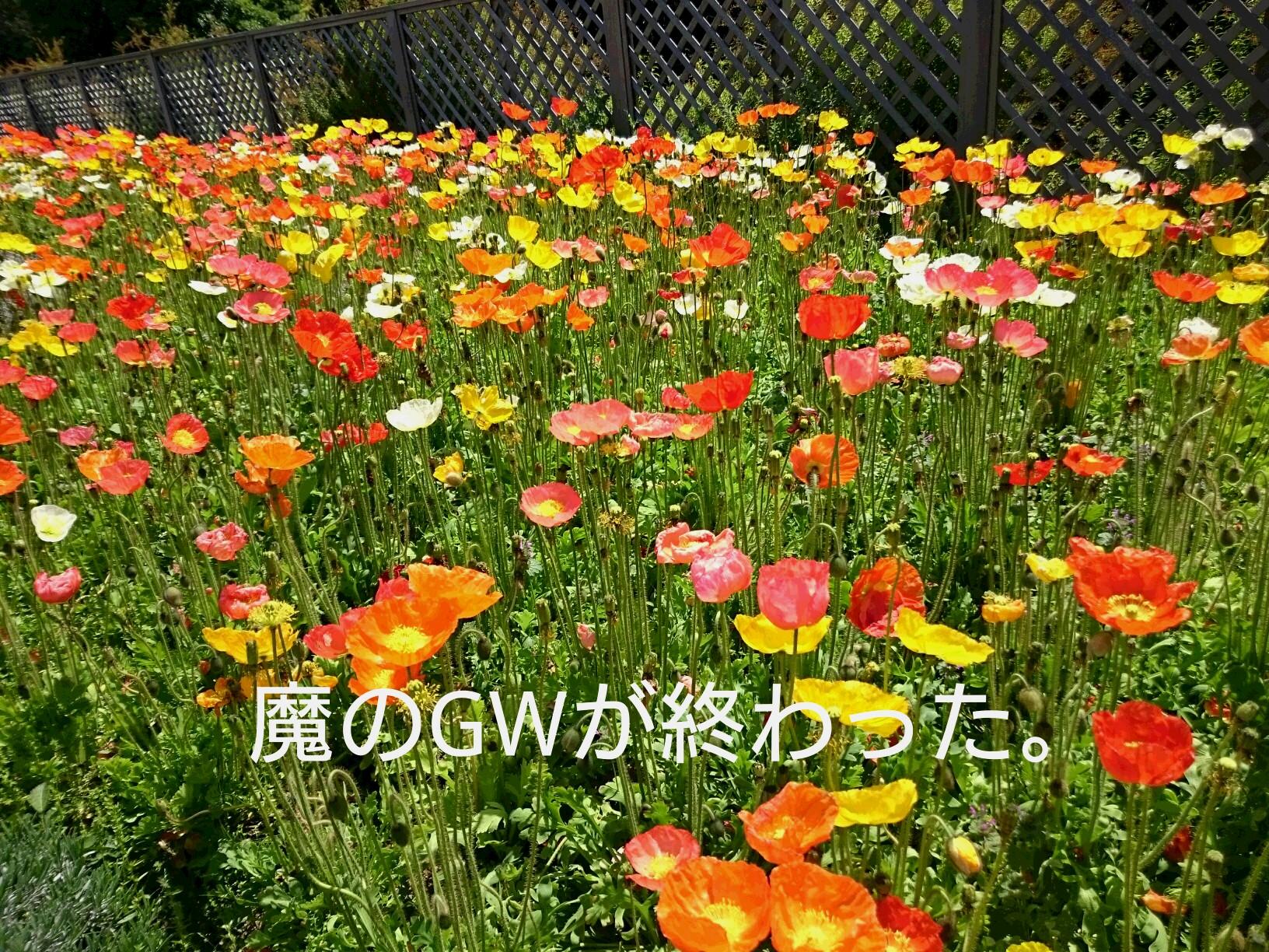 moblog_8e92173c.jpg