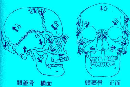 頭蓋骨移動
