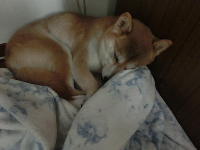 ちょっといびき的な寝息