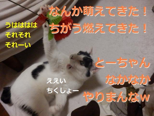 P5146431_20170526214856f08.jpg
