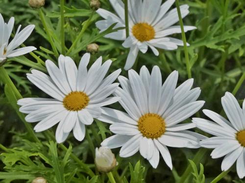 かわいい花です