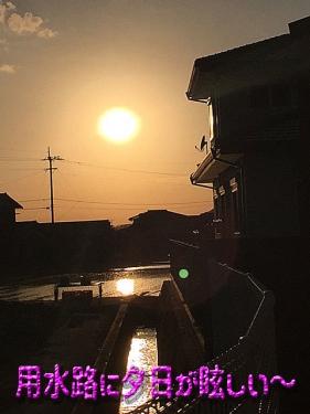用水路に夕日が