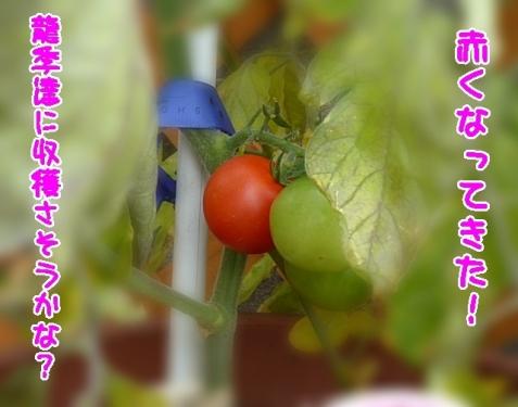 龍季達に収穫