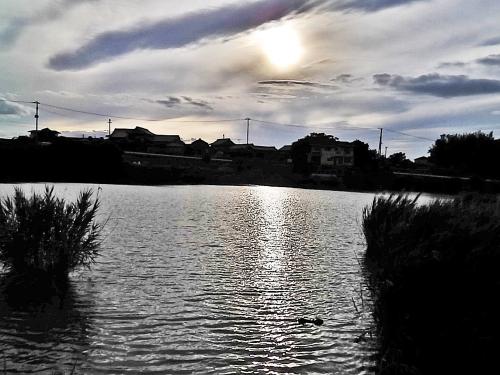 溜池に落ちる夕日