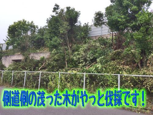 茂った木が