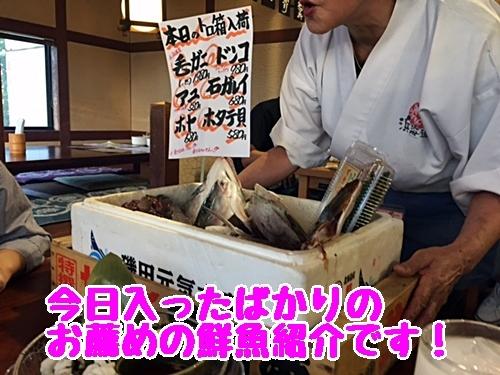 おすすめの鮮魚