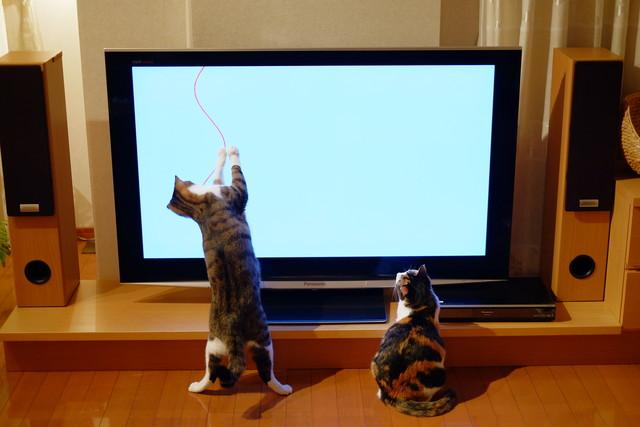 TV4DSCF2495.jpg