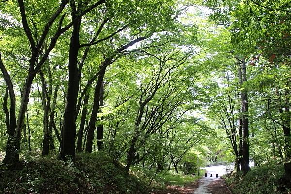 17上ノ山公園6