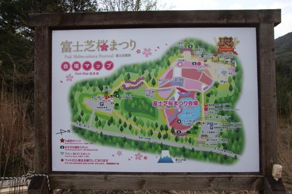 17富士芝桜6