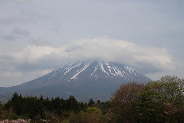 17富士芝桜23