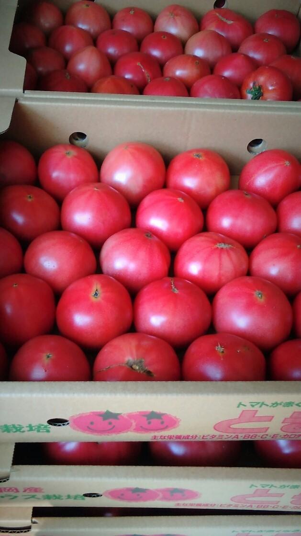 0429トマト