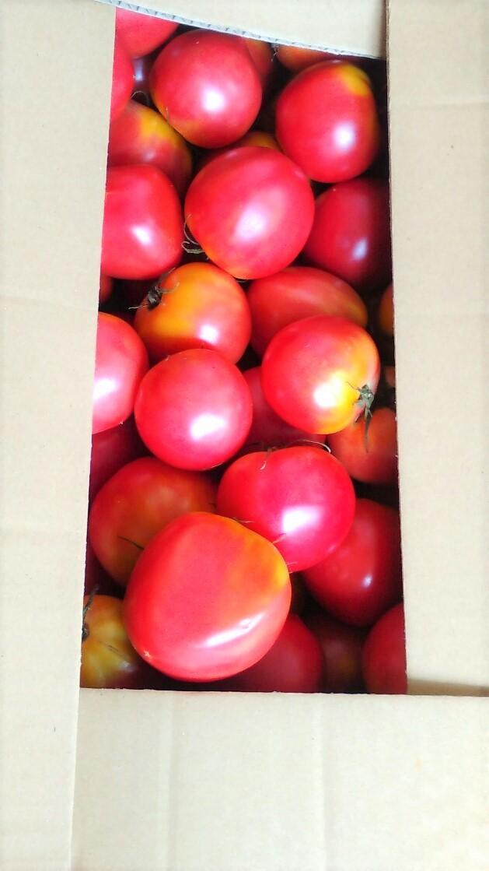 0701トマト-1