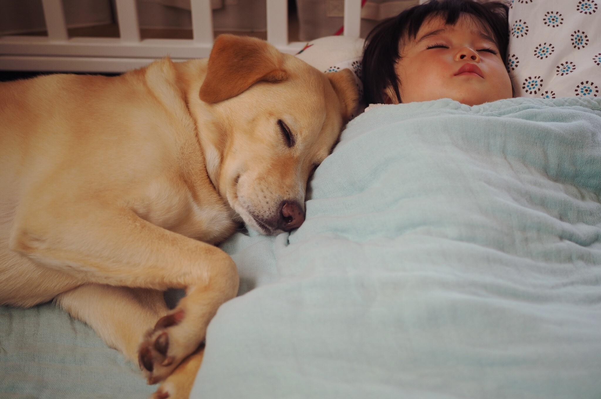 赤ちゃんと犬 赤ちゃんと大型犬 仲良し 子供と犬 子供と大型犬
