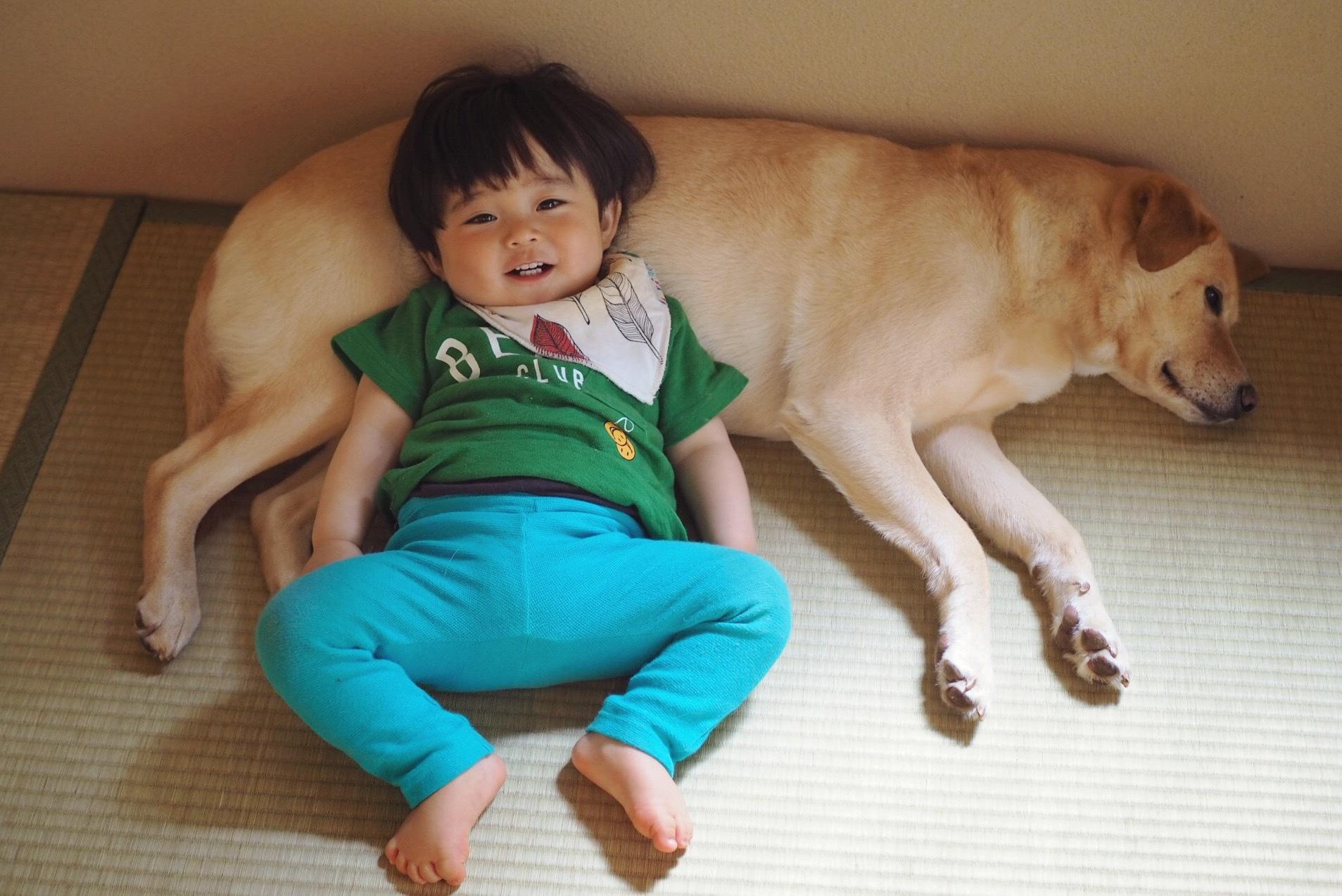 赤ちゃんと犬 赤ちゃんと大型犬 子供と大型犬 仲良し