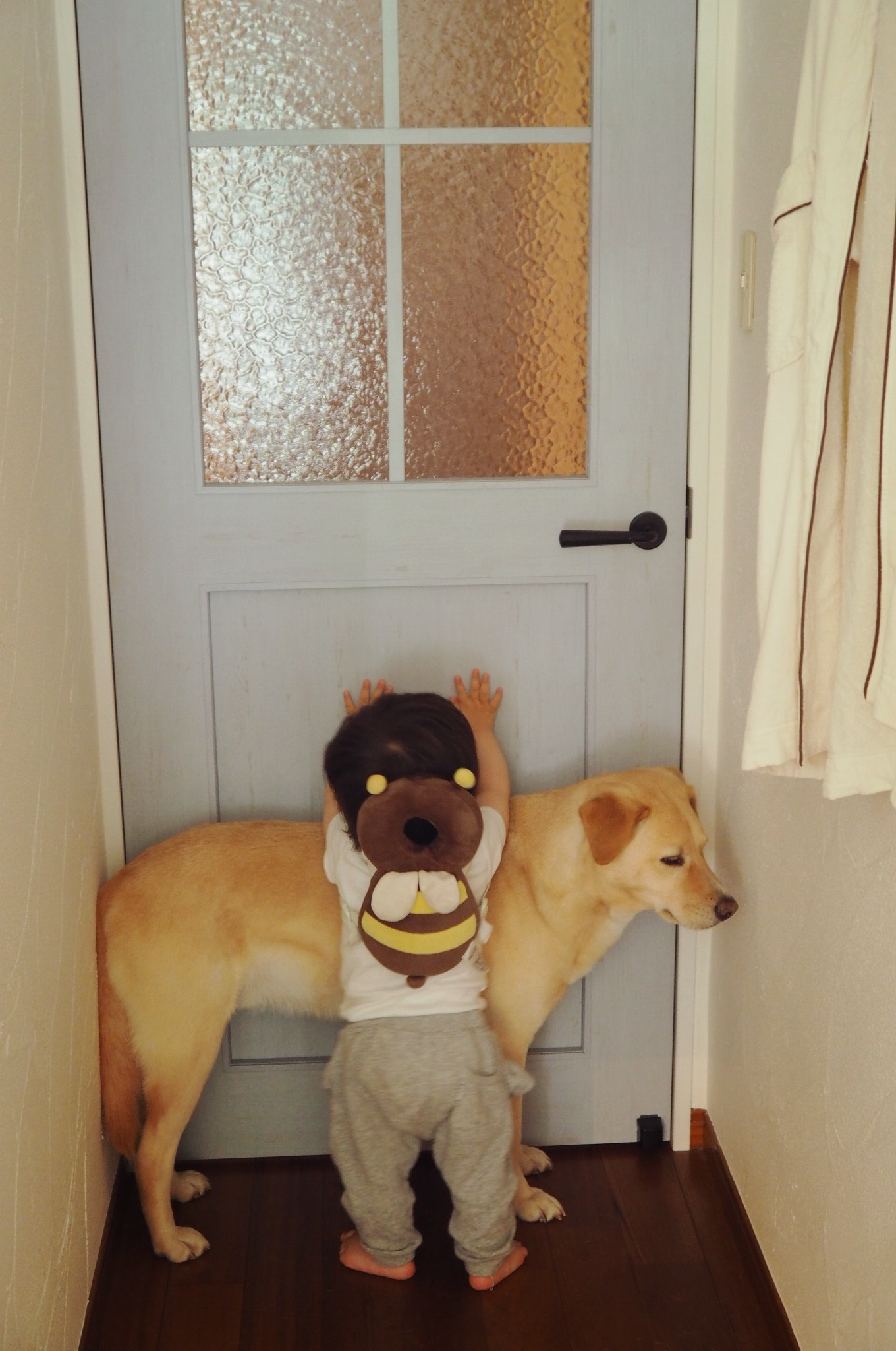 壁ドン 赤ちゃんと犬 子供と犬 赤ちゃんと大型犬 仲良し