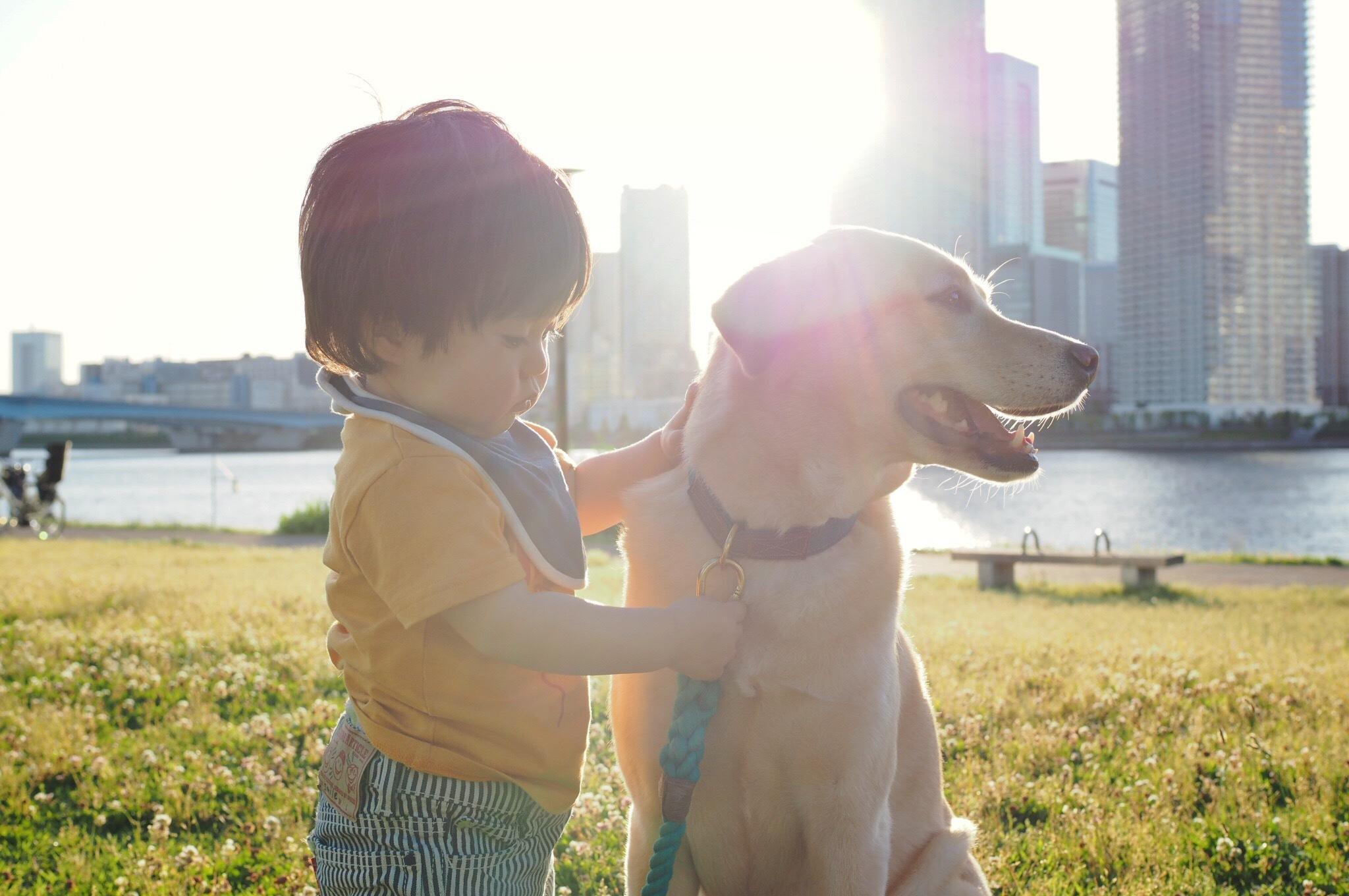 赤ちゃんと犬 子供と犬 赤ちゃんと大型犬 仲良し