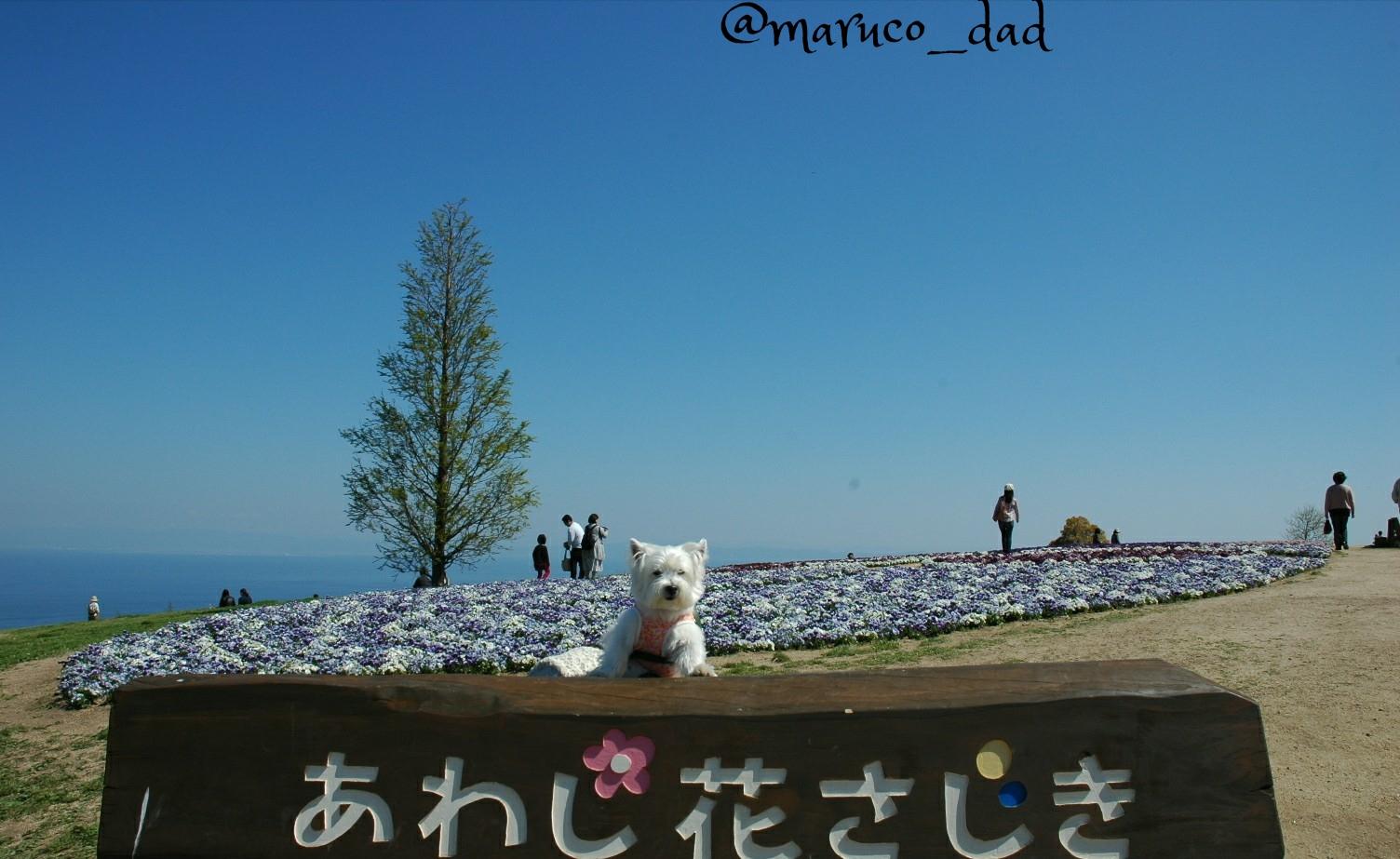 花さじき2