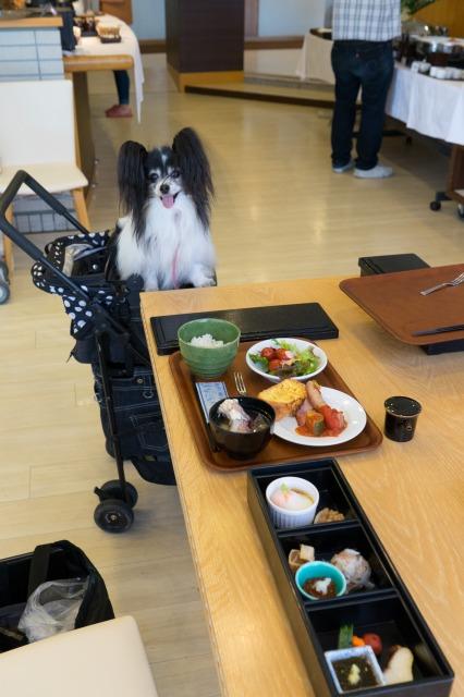 愛犬お宿-002