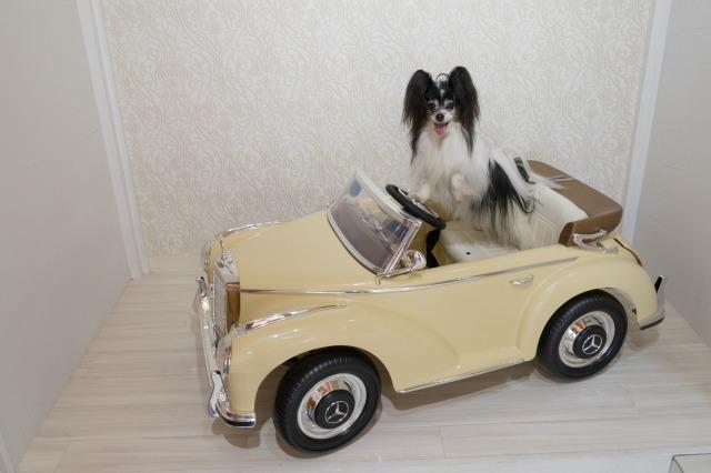 マリィの愛車-001