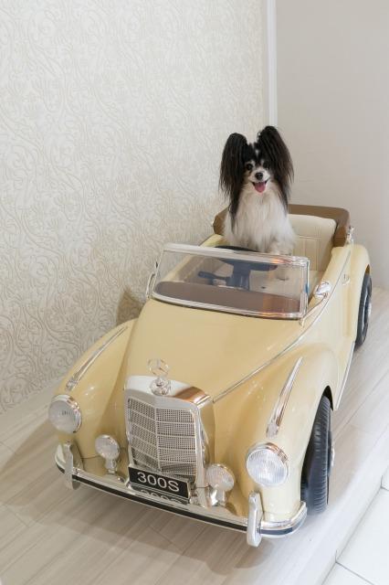 マリィの愛車-002