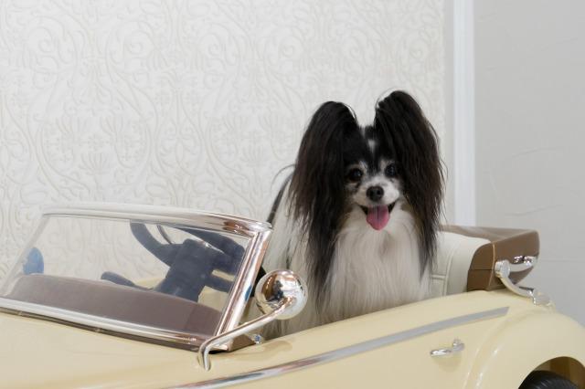 マリィの愛車-007