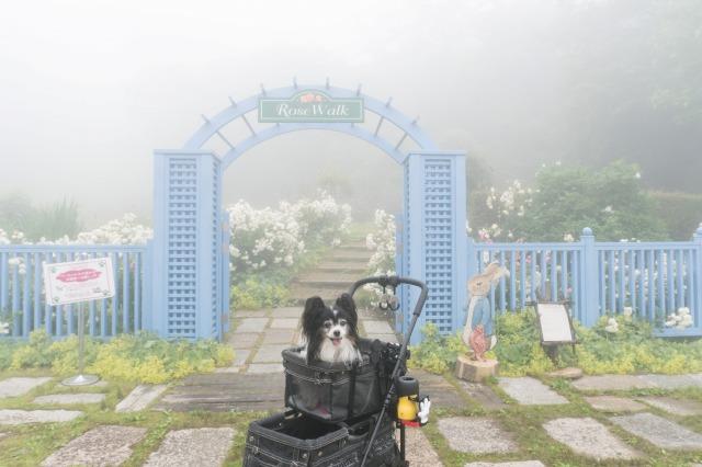 六甲山-004