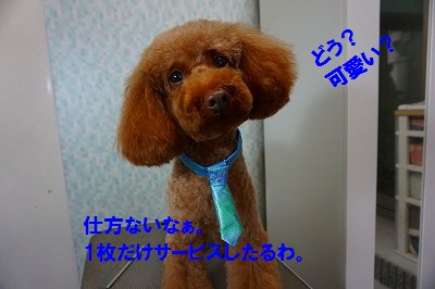 s-DSC00695.jpg