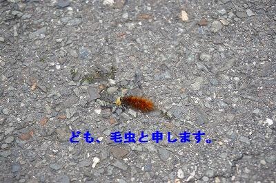 s-DSC01141.jpg