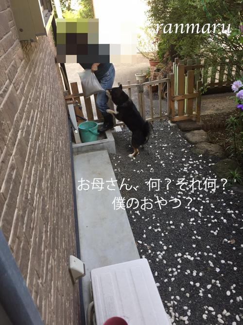 まるちゃん2017053001