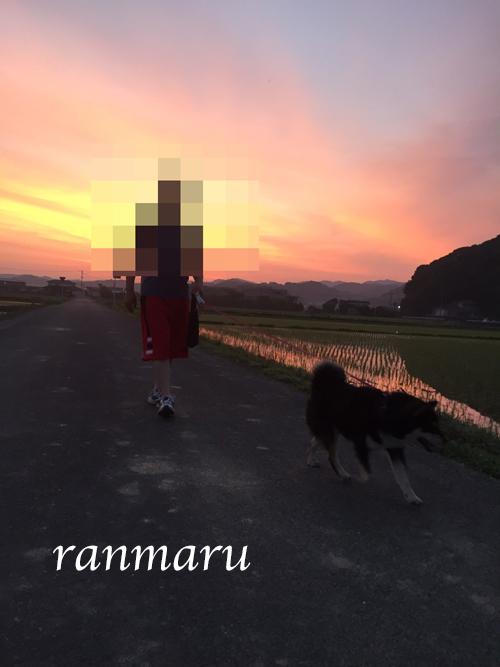 まるちゃん2017062204