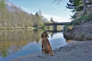 川面を眺めるワンコ小