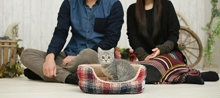 飼い主と猫2小