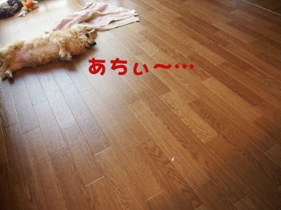 写真2460(№427)1
