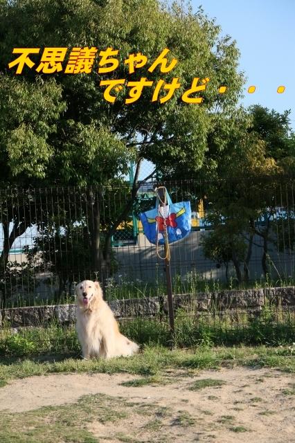 IMG_8276-2_12.jpg